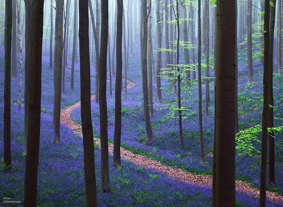 Halle Forest Belgium